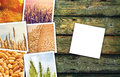 Wheat grains farming in agriculture photo collage Royalty Free Stock Photo