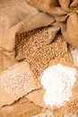 Wheat grains  and flour Royalty Free Stock Photo