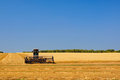 Wheat harvest in the field Royalty Free Stock Image