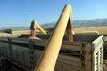 Wheat harvesting combine Royalty Free Stock Photo