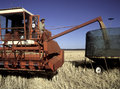 Wheat harvesting harvest in the central west of nsw australia Royalty Free Stock Image