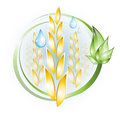 Wheat icon plants with green leaves and drops Royalty Free Stock Images