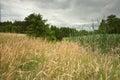 Wheat and meadow on Polish Pomerania