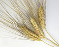 Wheat over white background Royalty Free Stock Photo