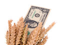 Wheat ripe harvest ears usa dollar cash banknote on usd banknotes isolated on white background autumn agriculture business Stock Photos