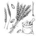 Wheat, rye and barley  on white background Royalty Free Stock Photo