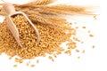 Wheat. Royalty Free Stock Photo