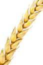 Wheat spike on white background Royalty Free Stock Image