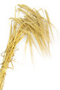 Wheat spike on white background Stock Image