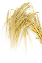 Wheat spike on white background Stock Photos