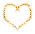 Wheat spikelets of in the form of heart Stock Image