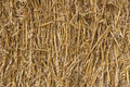 Wheat Straw Stock Image