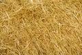 Wheat straws background Royalty Free Stock Photo