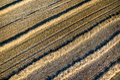 Wheat stubble