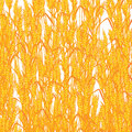 Wheat summer background Royalty Free Stock Photos