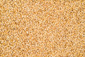 Wheat Texture Royalty Free Stock Image