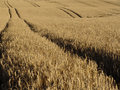 Wheat tracks Stock Photography