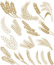 Wheat vector Stock Photography