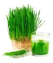 Wheatgrass juice with sprouted wheat on the plate isolated white background Stock Photo