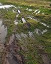Wheel Marks On Sodden Turf Stock Photos