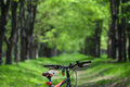 Wheel mountain bike and sunglasses on a trail in the forest Royalty Free Stock Photo