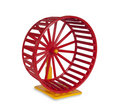 Wheel for rodents Royalty Free Stock Photo