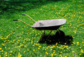 Wheelbarrow with dandelions an empty in a yard of Royalty Free Stock Photo