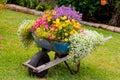 Wheelbarrow Flowers Royalty Free Stock Photo