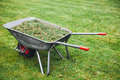 Wheelbarrow with grass on green lawn Royalty Free Stock Photo