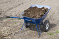 Wheelbarrow with manure blue full of worth in the garden Royalty Free Stock Photo