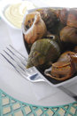 Whelk Royalty Free Stock Photography