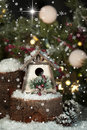 Whimsical christmas birdhouse a and rustic on snow covered pine tree stump evergreen branches and snowballs and bright star in Royalty Free Stock Images
