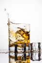 Whiskey splashing in glass on a white background Stock Images