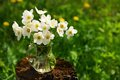 White anemones in glass jar on old stump in meadow copyspace Royalty Free Stock Photo
