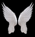White angel wing Royalty Free Stock Photo