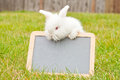 White Angora Rabbit with Blank Chalkboard Stock Photos