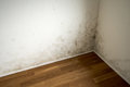 White apartment wall with toxic mold and mildew Royalty Free Stock Photo