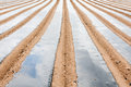White asparagus field in Tudela Stock Images