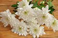 White asters Royalty Free Stock Photo