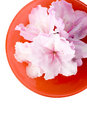 White Azaleas, red bowl, clipping path; from above Stock Photography