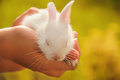 White baby cute rabbit Royalty Free Stock Photo