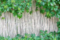 White bamboo fence texture background with green grape leaves Royalty Free Stock Photo