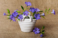White basket with blue periwinkle beautiful Stock Images