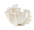 White beech mushrooms, Shimeji mushroom, Edible mushroom isolate Royalty Free Stock Photo