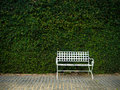 White bench in garden lush Stock Photography