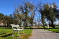 White bench in the park palic Royalty Free Stock Photo