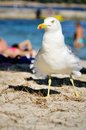 White bird on the beach Royalty Free Stock Photography