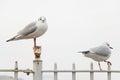 White bird seagulls Royalty Free Stock Photo