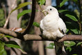 White bird sunning Royalty Free Stock Photo