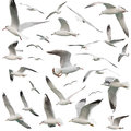 White Birds fijó aislado Fotografía de archivo libre de regalías